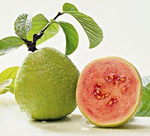 Ổi là loại trái cây nhiệt đới