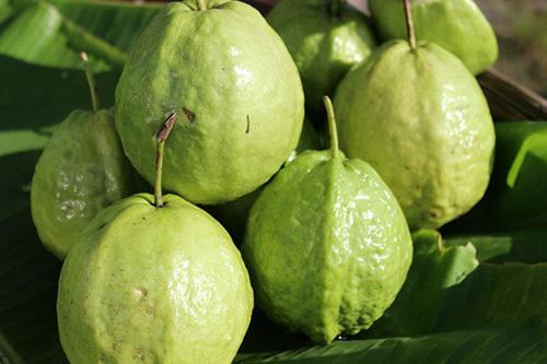 Vitamin C trong ổi giúp hấp thụ các chất dinh dưỡng thiết yếu