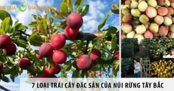 trái cây đặc sản vùng tây bắc
