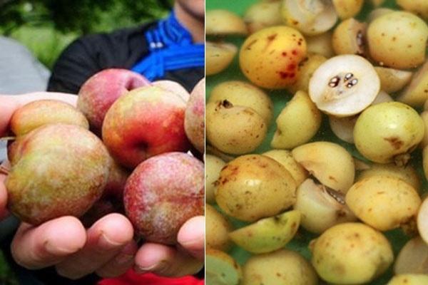 7 loại trái cây là đặc sản của núi rừng Tây Bắc 1