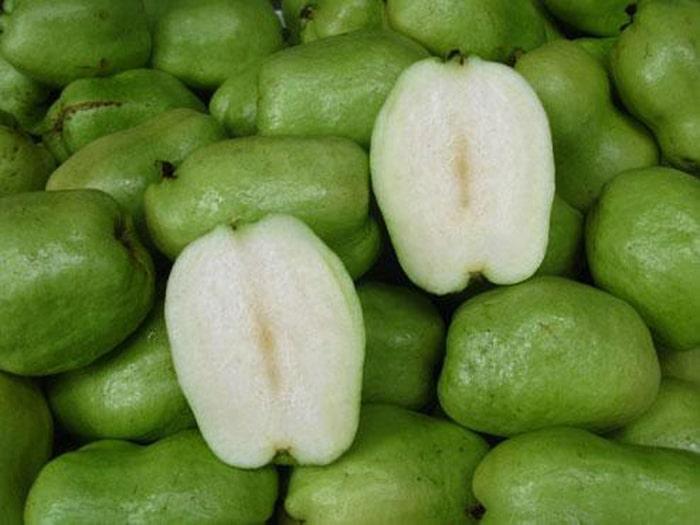 Ổi Phugi cho trái lớn, năng suất cao