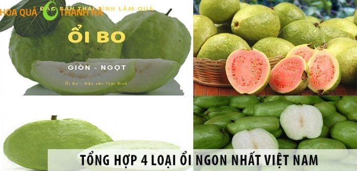 Tổng hợp 4 loại ổi ngon nhất Việt Nam