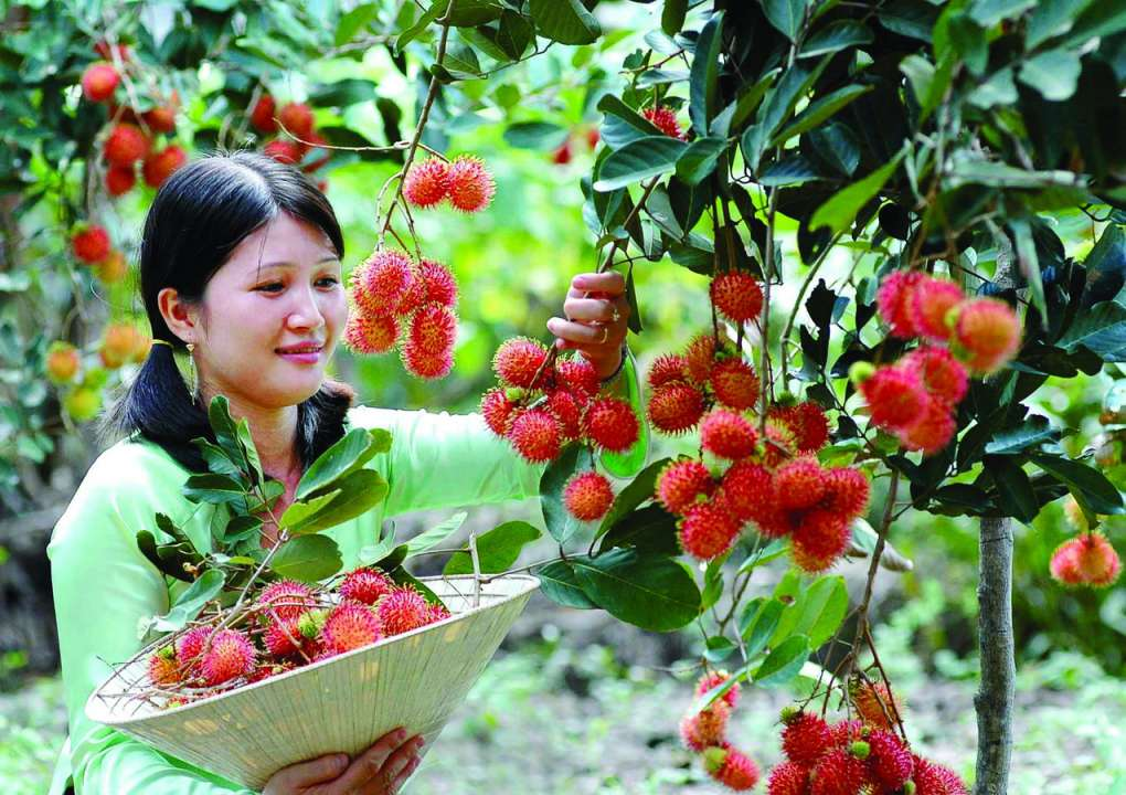 4 vựa trái cây lớn nhất đồng bằng sông Cửu Long