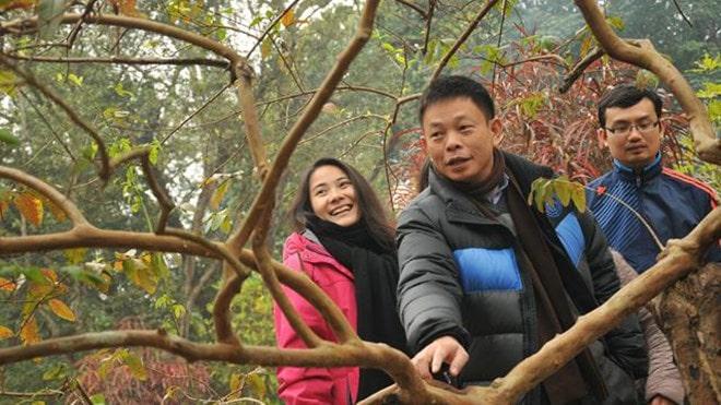 """Ổi """"cười"""" – Bí ẩn của mảnh đất Lam Kinh, Thanh Hóa"""