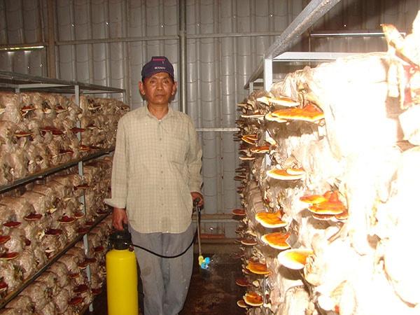 Dự án trồng nấm ăn và nấm dược liệu tại Đà Nẵng thành công hay thất bại?