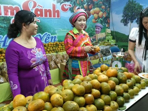 Cam sành huyện Hàm Yên (Tuyên Quang) là một trong những loại cam ngon và rất có giá trị
