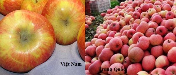 Cách phân biệt táo Trung Quốc và táo Việt Nam