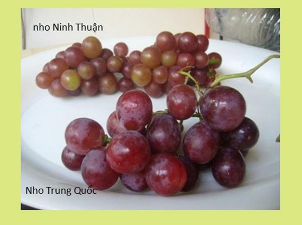 Nho đỏ Việt Nam và nho đỏ Trung Quốc