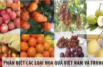 Cách phân biệt các loại hoa quả Việt Nam và hoa quả Trung Quốc