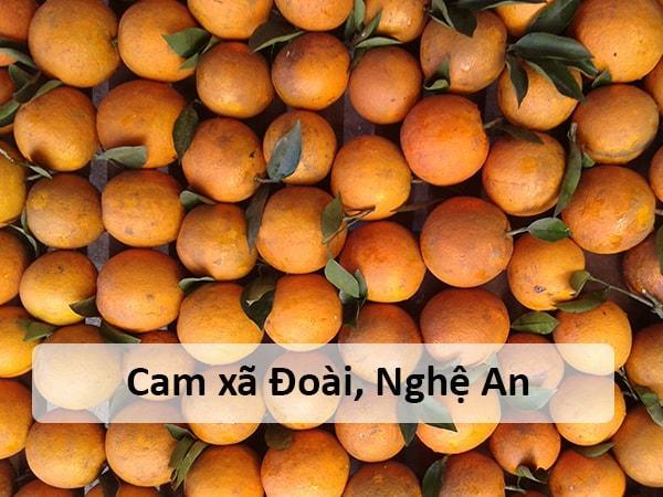 Cam xã Đoài, Nghệ An