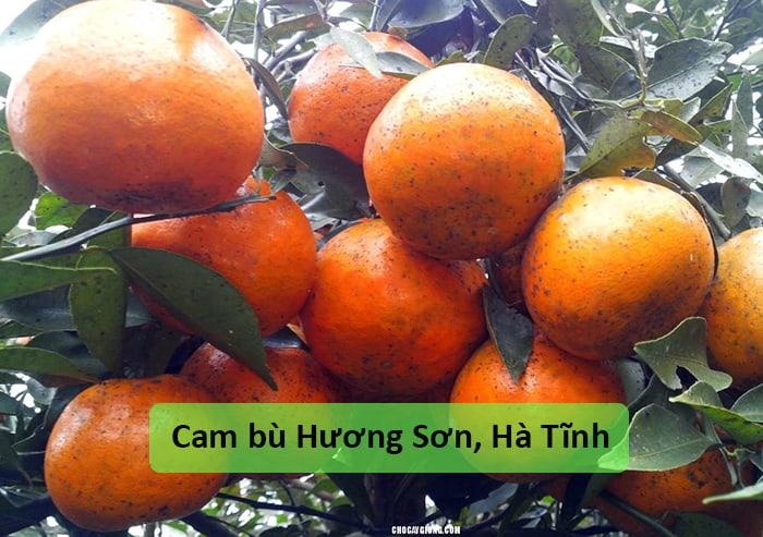 Cam bù Hương Sơn, Hà Tĩnh