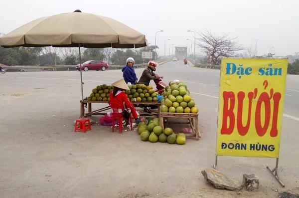 Bưởi mang thương hiệu bưởi Đoan Hùng được bày bán ở nhiều nơi nhưng chưa chắc đã là bưởi chính gốc