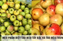 Mẹo phân biệt táo mèo Tây Bắc và táo mèo Trung Quốc