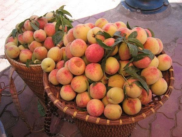 Những trái đào tròn, phớt hồng được bán rất nhiều ở các chợ