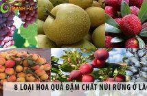 8 loại hoa quả đậm chất núi rừng ở Lào Cai