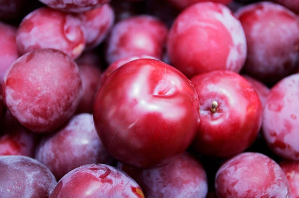 Quả mận đỏ Sapa có rất nhiều lợi ích về sức khỏe