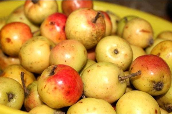Đặc sản táo mèo Tú Lệ, Yên Bái thường được dùng để ngâm rượu
