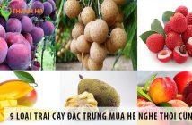 9 loại trái cây đặc trưng mùa hè nghe thôi cũng thèm