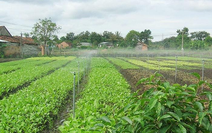 Sử dụng hệ thống tưới phun sương trong nông nghiệp