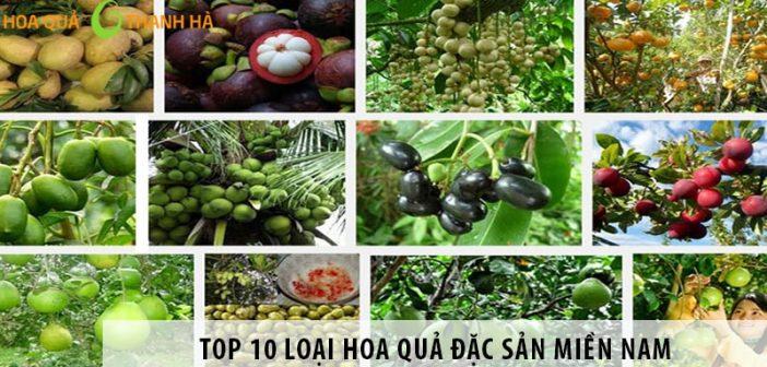Top 10 loại hoa quả đặc sản miền nam nghe tên đã thèm