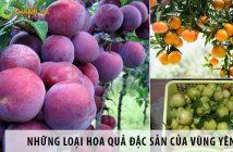 Những loại hoa quả đặc sản của vùng Yên Bái