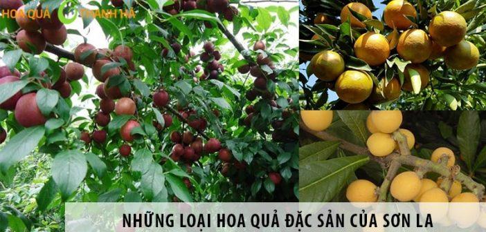Những loại hoa quả đặc sản của Sơn La bạn nên thưởng thức