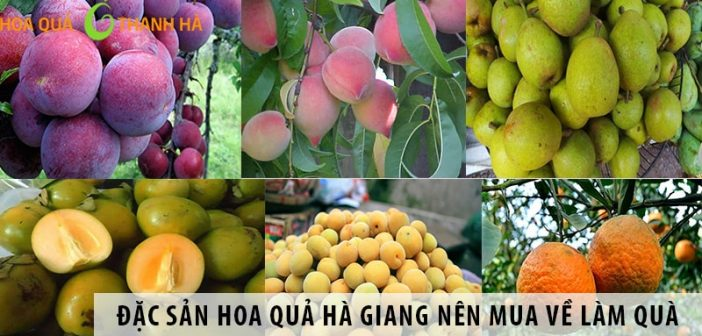Đặc sản hoa quả Hà Giang nên mua về làm quà