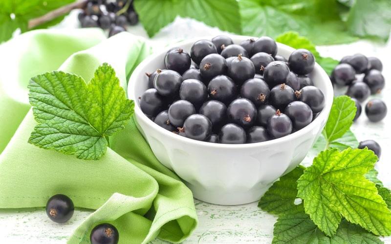100g lý đen có chứa tới 200mg vitamin C