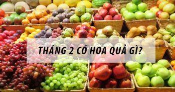 Tháng 2 mùa trái cây gì? Những loại quả nào không nên bỏ lỡ?