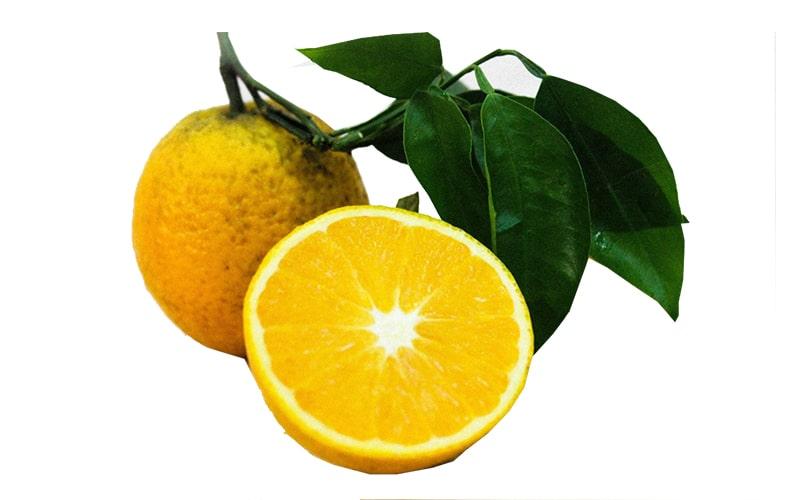 Cam Cao Phong là loại quả rất nổi tiếng của Hòa Bình