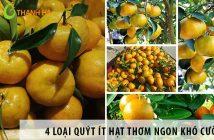 4 loại quýt ít hạt thơm ngon khó cưỡng