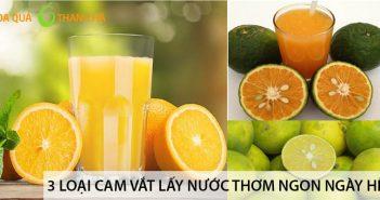 3 loại cam vắt lấy nước thơm ngon cho ngày hè 1
