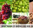 Ninh Thuận có những loại trái cây gì? 7