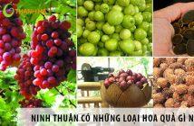 Ninh Thuận có những loại trái cây gì? 1