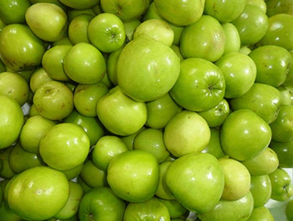 Táo xanh Ninh Thuận được trồng phổ biến ở Phan Rang