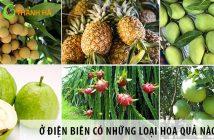 Ở Điện Biên có những loại hoa quả nào ngon?