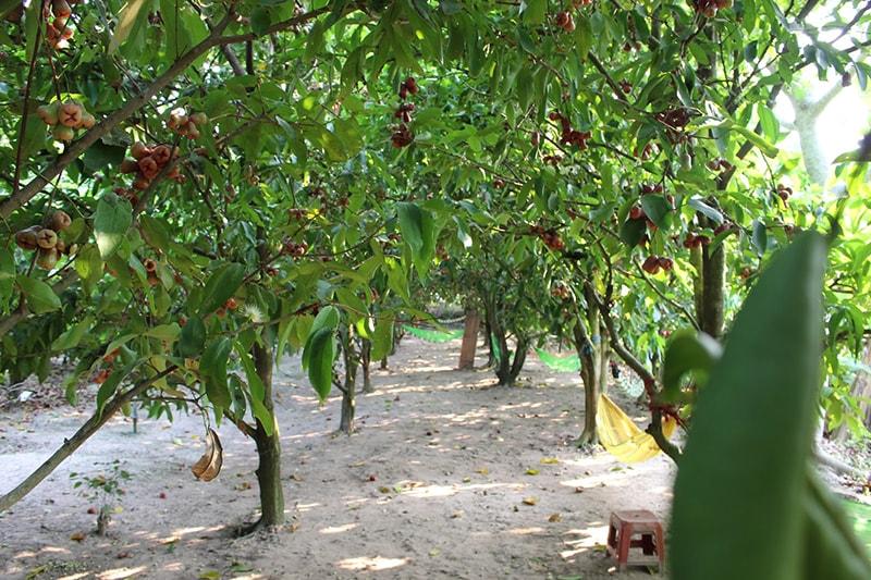 Vườn trái cây Cù Lao An Bình – Vĩnh Long