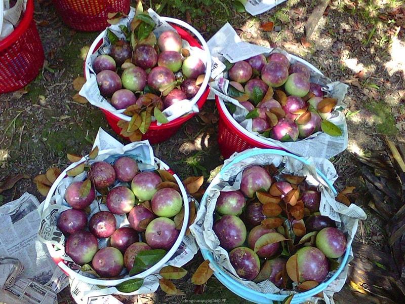 Vườn trái cây Cái Bè – Tiền Giang