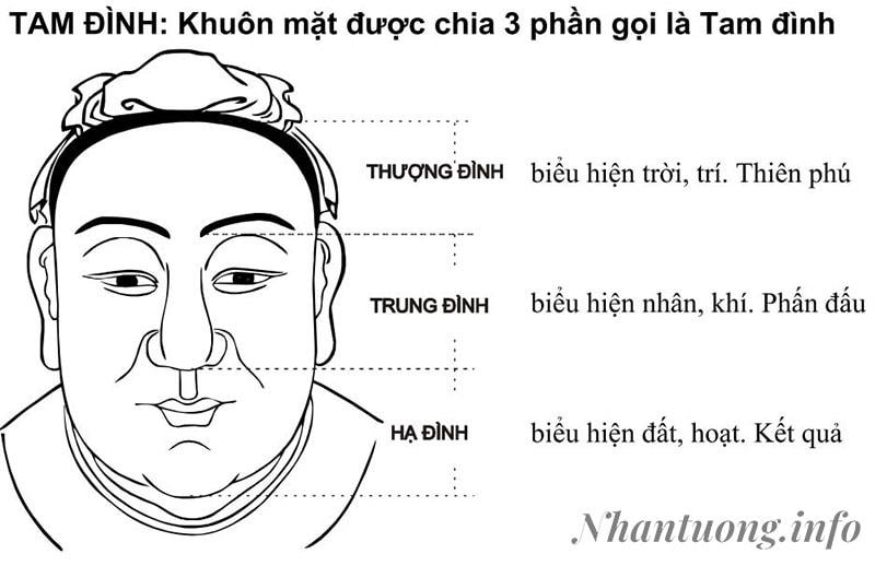 Khuôn mặt được chia theo Tam Đình