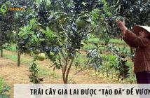 """Trái cây Gia Lai được """"tạo đà"""" để vươn xa"""