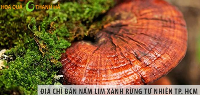 Địa chỉ bán nấm lim xanh rừng tự nhiên tại TP Hồ Chí Minh