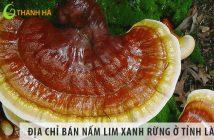 Địa chỉ bán nấm lim xanh rừng uy tín tỉnh Lào Cai