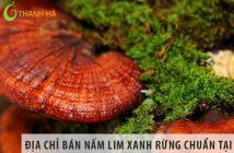 Địa chỉ số 1 bán nấm lim xanh rừng chuẩn tại Hà Nội