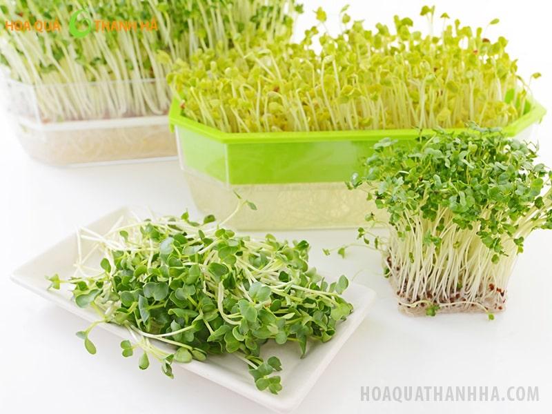 Rau mầm cung cấp dưỡng chất cao gấp 5 lần các loại rau thông thường khác