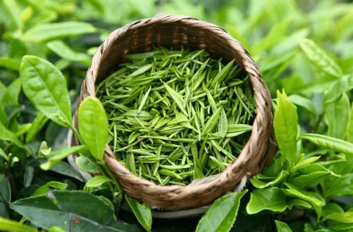 Tác dụng của trà xanh giúp chống lão hóa